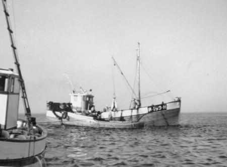 Nøkkerosa 1955