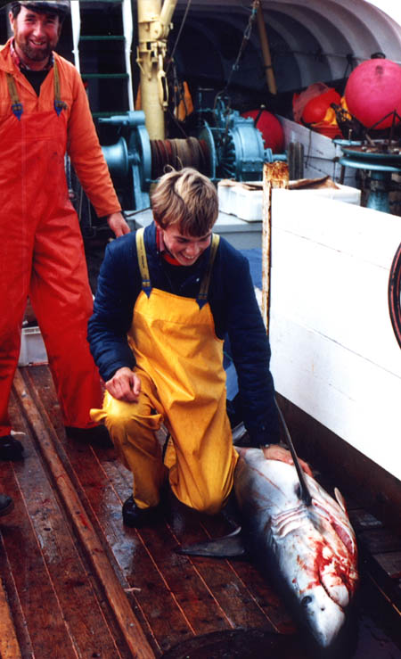 Fishermen and a porbeagle