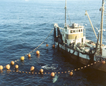 Tuna seiner in 1971. Photo: fiskeri.no