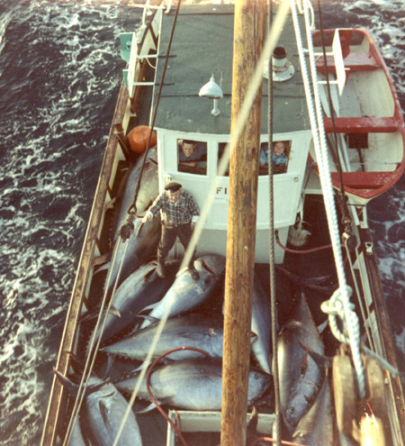 A fish carrier loaded with bluefin tuna. Photo: fiskeri.no