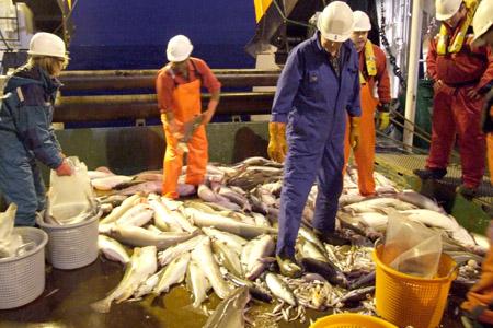 Trålhal i Nordsjøen. Foto: Kystbloggen