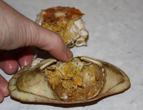 rive av klørne på levende krabber