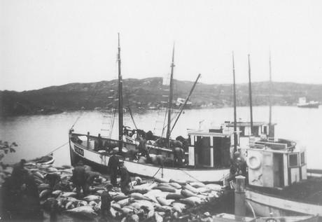 Makrellstørje på Kvitsøy